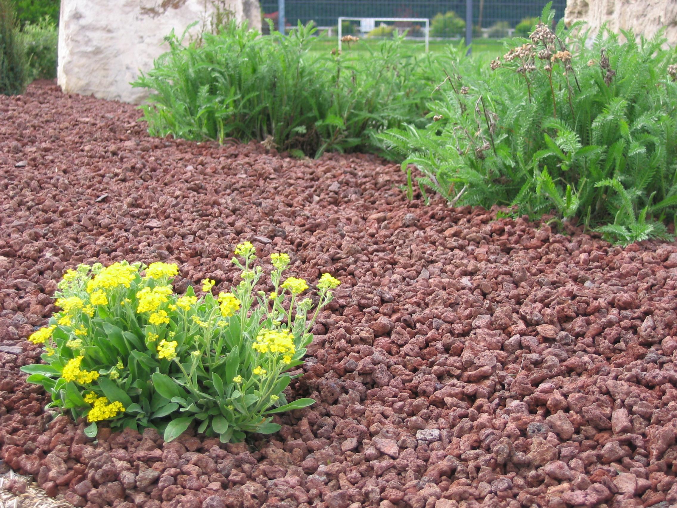 paillage decoratif pour jardin